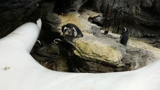 more cute penguins!