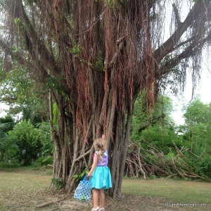 This amazing tree is right down the street from our house. I love exploring our neighborhood with my little adventurer.