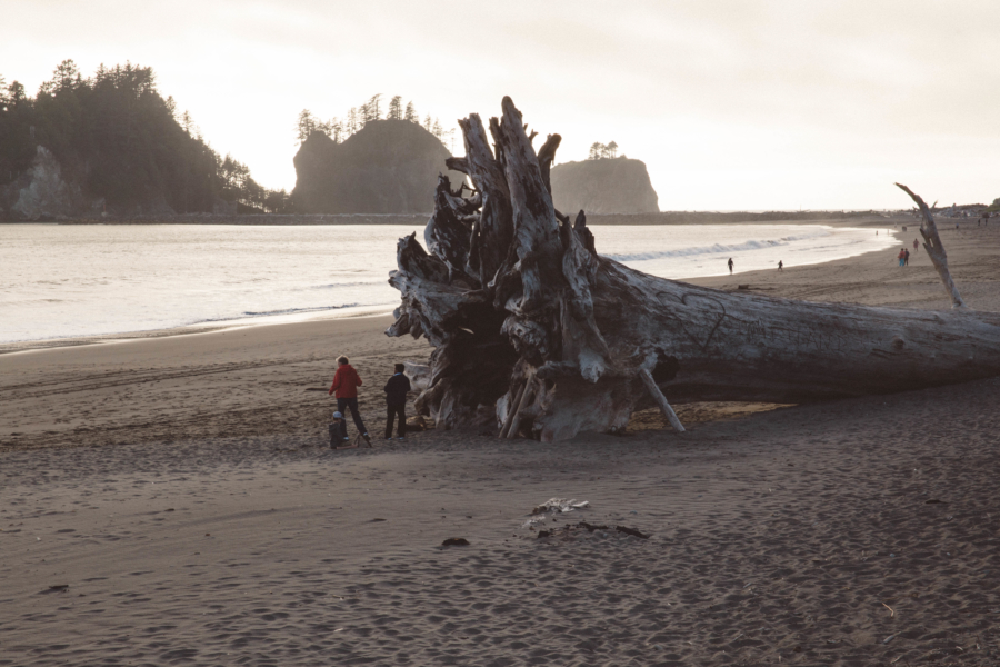 PNW Road Trip Giant Redwood on the Beach La Push Olympic Peninsula
