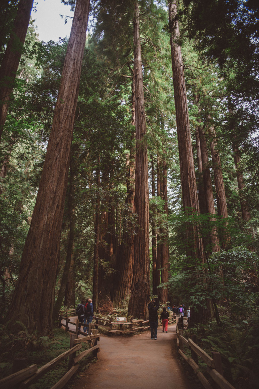 PNW Road Trip Muir Woods California