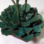 Andy Rader - Bronze - Echeveria spp. 02