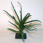 Andy Rader - Bronze - Aloe Hybrid