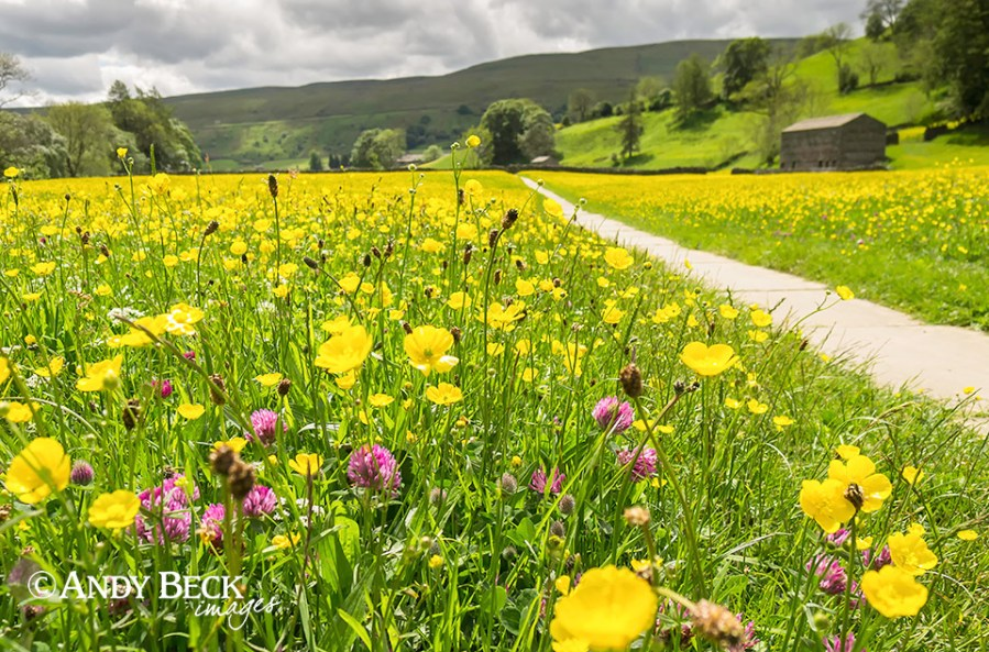 Swaledale meadow, North Yorkshire