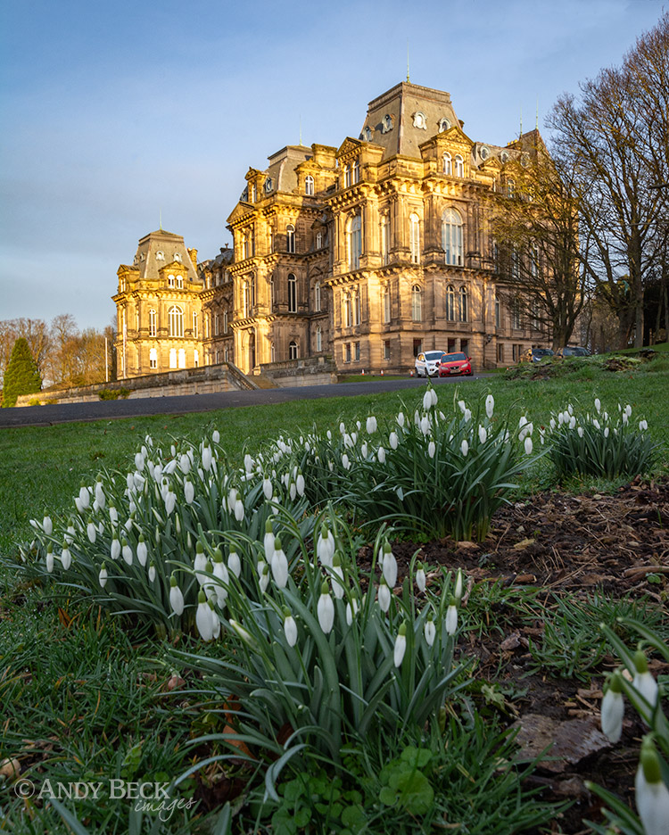 Bowes museum snowdrops