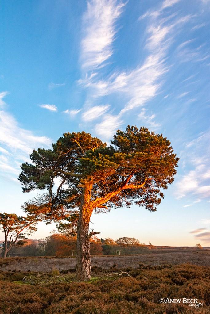 Lone Pine, evening light