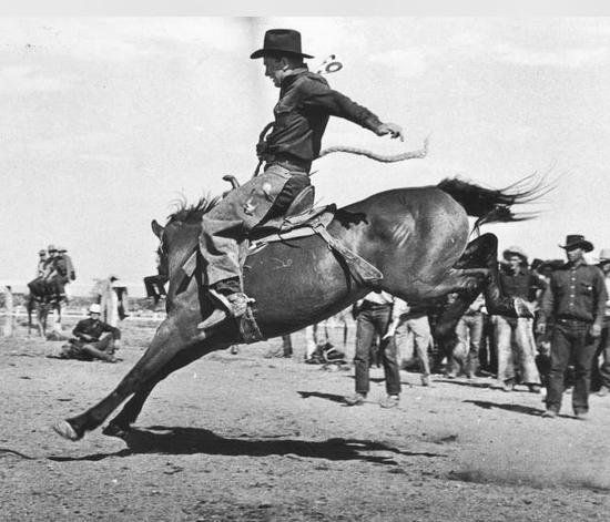 Bucking Horse at the Confederate Reunion and Rodeo