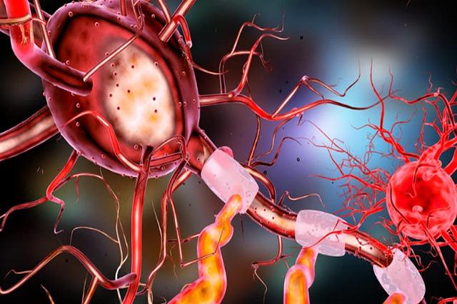 Neuron Brain Human Nerve Science