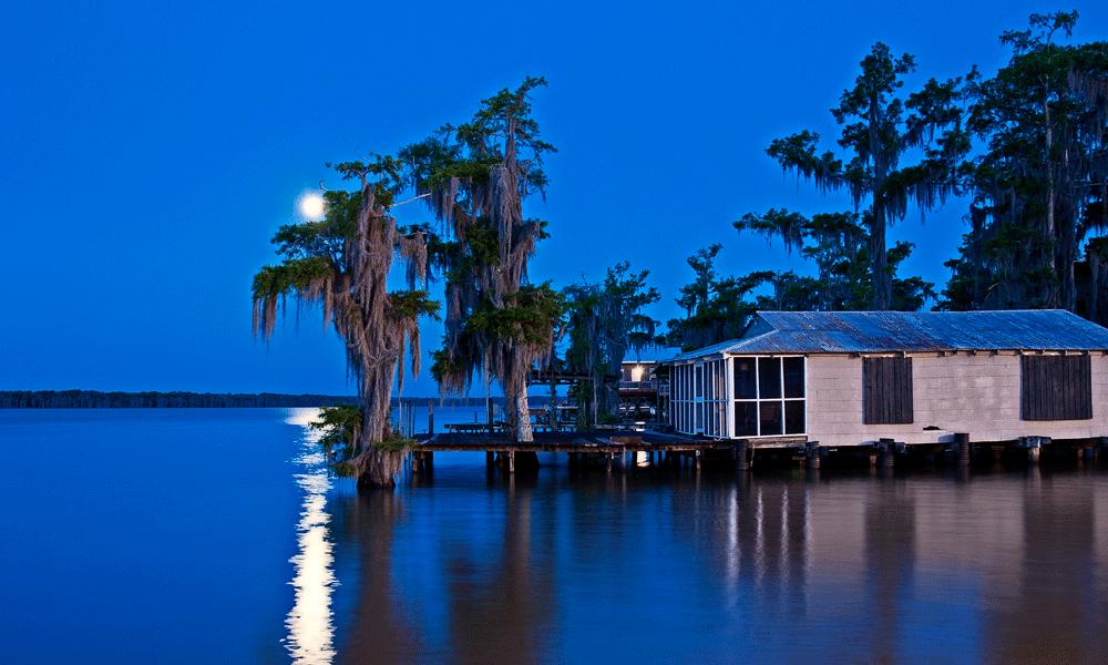 Louisiana swamp photography
