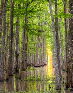 Bayou Teche NWR photography