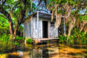 Cajun swamp photography