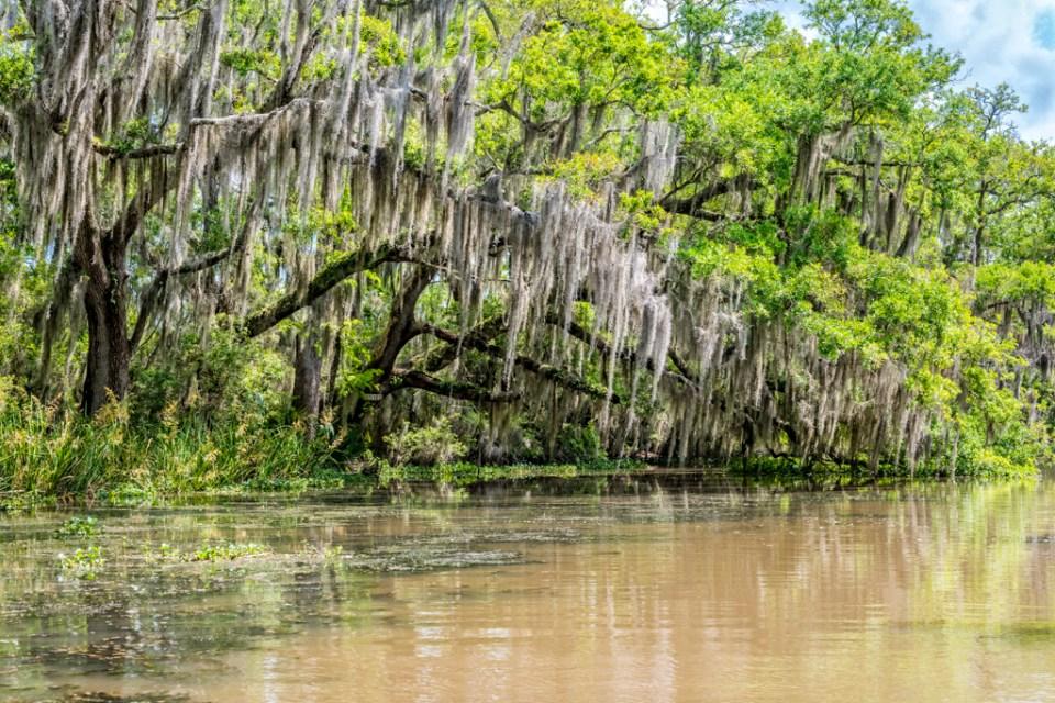 Bayou Teche NWR photography