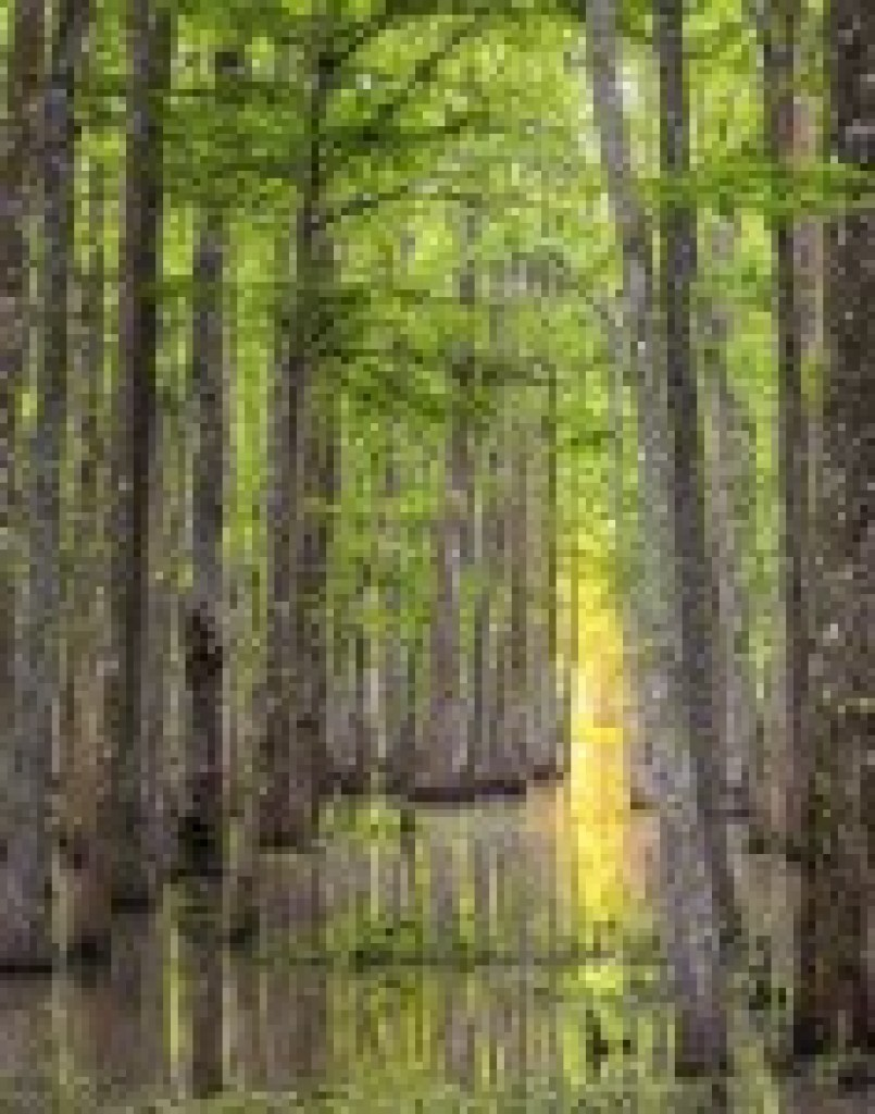 Bayou Teche National Wildlife Refuge swamp photography