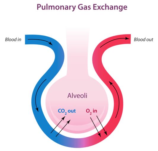 pulmonarygasexchange