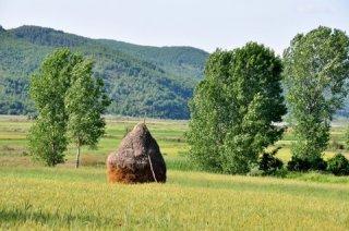 Field in Albania