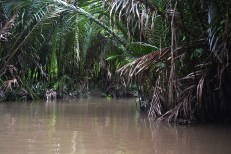 A calming and beautiful boat trip around the backwaters of the Mekong Delta.