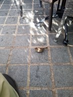 And these little guys coming after our food at dinner.