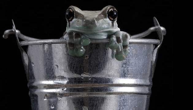 The Frog in the Milk Churn.