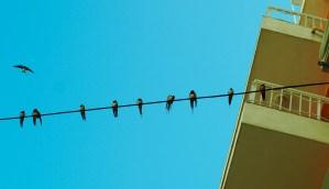 11 LITTLE BIRDS