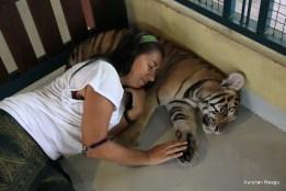 Tiger Kingdom, Chiang Mai 13