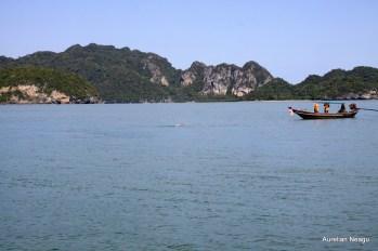 delfinii_Golful_Thailandei_4