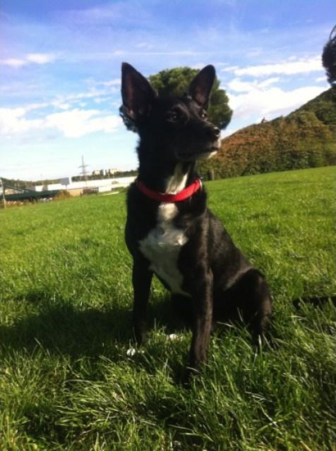 Blacky en el parque