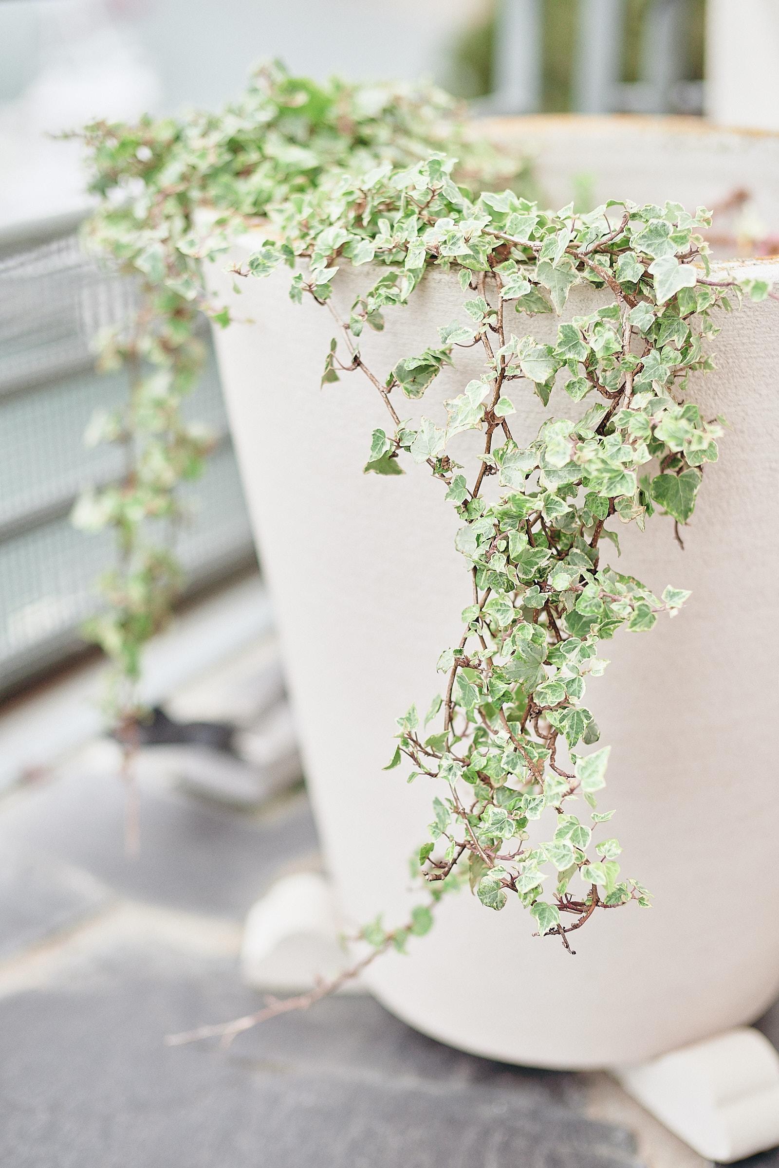 plante sur le balcon de l'hotel castelbrac