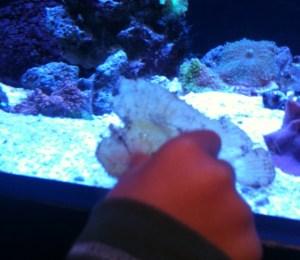 seattle aquarium with kids