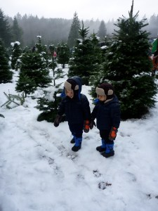 looking for christmas with toddlers near seattle