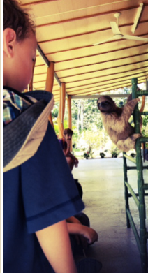 visiting the sloth sanctuary where you can see sloths with kids in costa rica