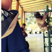 Sloth Sanctuary (Cahuita, Costa Rica)