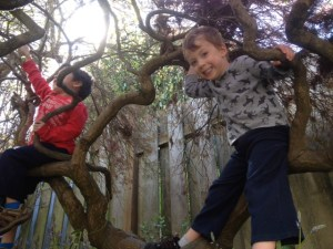 Climbing in a tree