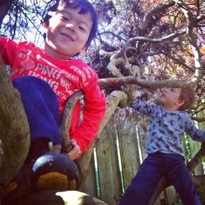 Kids climbing in a tree in the backyard