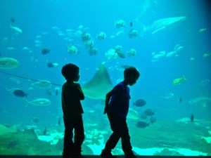 Georgia aquarium with kids: family travels