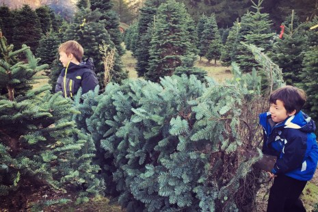 cutting down a tree at christmas creek near seattle