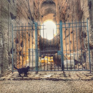 Learning about cat sanctuaries in Rome because of the Colosseum facts in the Ancient Wonders Then and Now Books by Lonely Planet