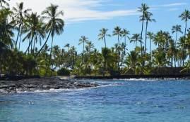 Sprachlos-in-Hawaii-Palmen