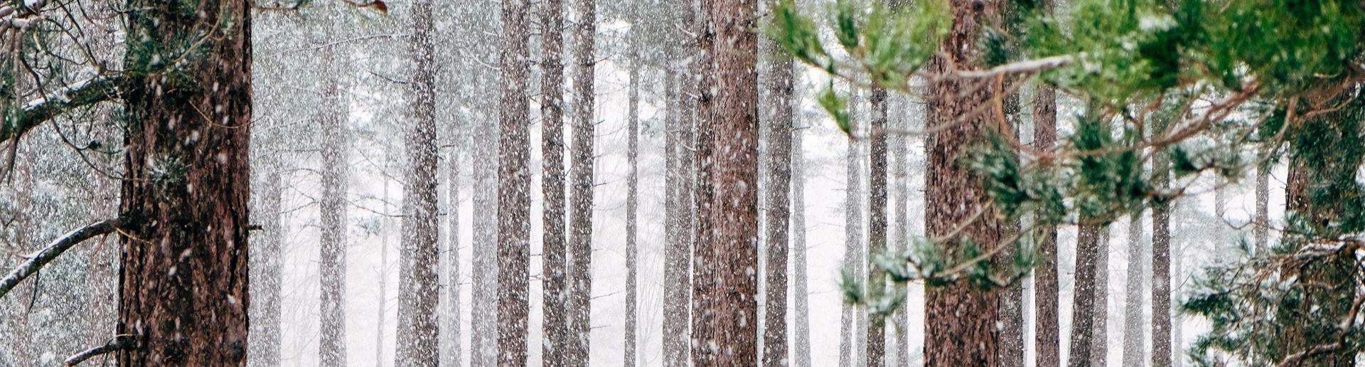 Winter destratification