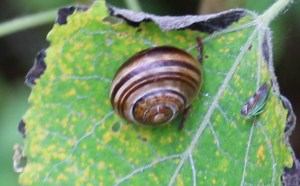 Snail, insect, unidentified, July 2013