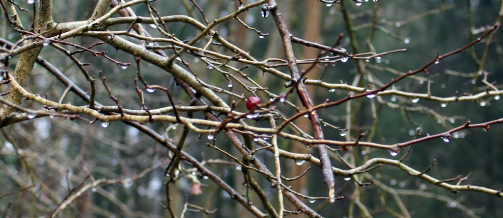 Trees, Hawthorn, February 2016