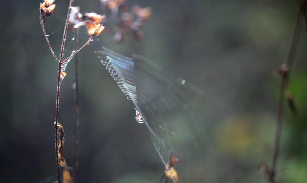 Spider, unidentified, October 2016