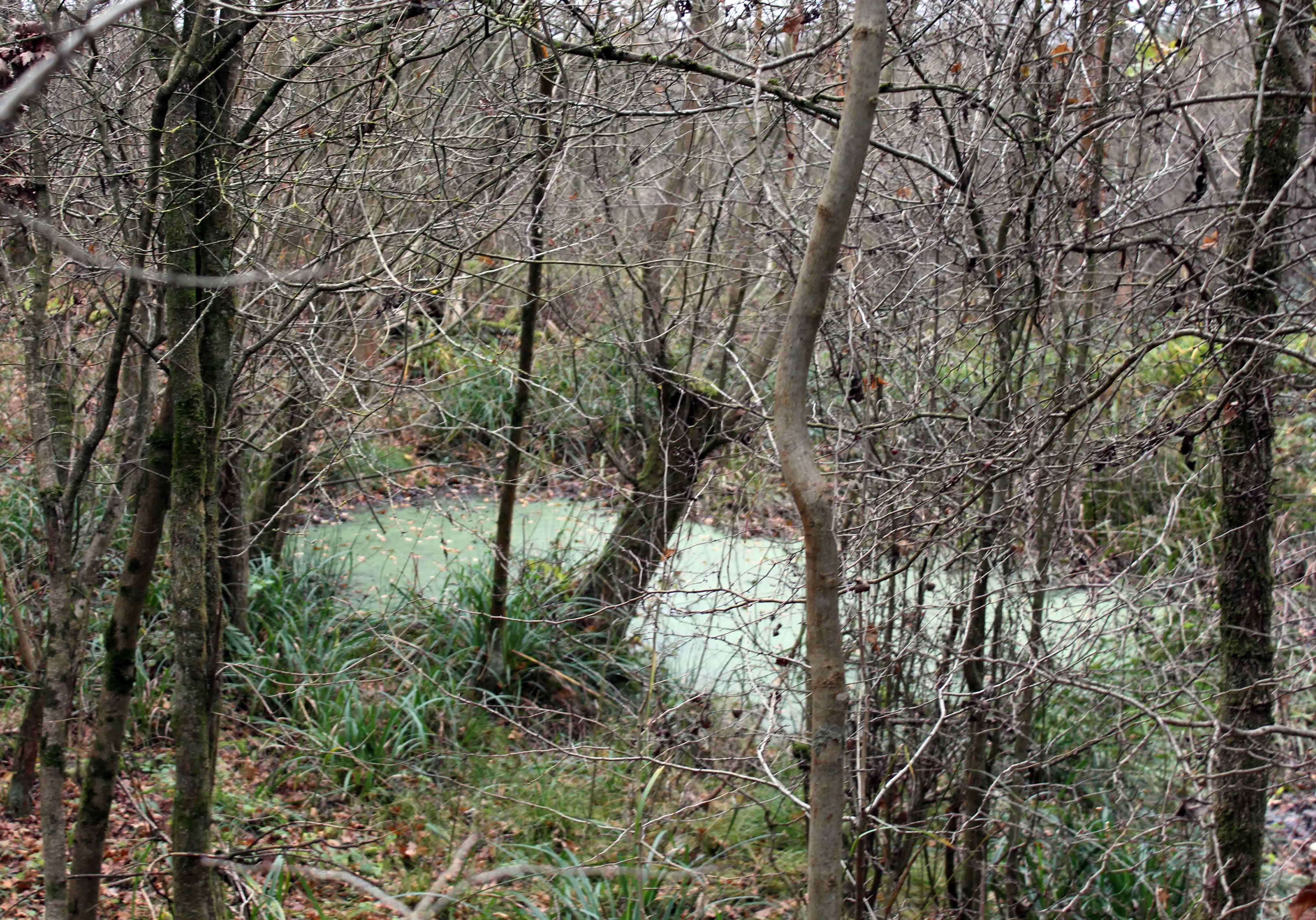 Nature, pond, December 2017