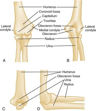 Humerus and Elbow | Anesthesia Key