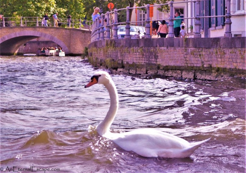 A Romantic Route itinerrary for Bruges Old Town, Belgium, Rozenhoedkaai, #Travel Itinerary for Bruges, #Romantic Destination guide to Bruges, #Romantic route for Bruges , #A visit to Bruges canals , #Things to See and Do in Bruges , #Unesco World Heritage city of Bruges , #Most Romantic City of Belgium, #A Must See City in Belgium, #Budget tips for Bruges, #Travel Guide for Bruges, #Canal Tour in Bruges, #Hidden Gems in Bruges, #Explore Bruge's most romantic corners, #Top 10 places in Bruges you should not miss, #How to spend 24 hours in Bruges