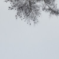 Bird Fall