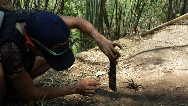 Trekking guide og edderkop4