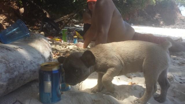 Oe strand hund