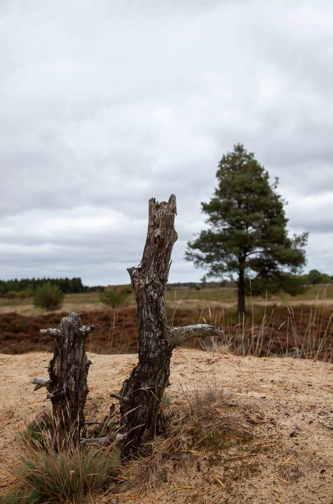 Træstubbe natur