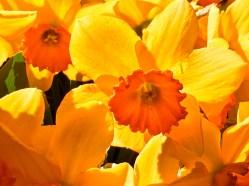 I love the light shining through the petals.