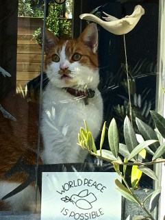"""One of the """"little guesthouse"""" windows held this mustachioed kitty, who apparently has great hopes."""