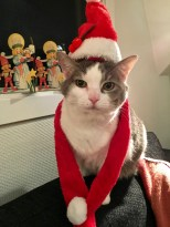 I'm not normally one for dressing up my cats in human clothes, but this outfit was a gift from friends, so I have to show them this photo. Look at Jess's poor, long-suffering face.